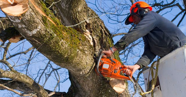 Windsor Tree Service Pros