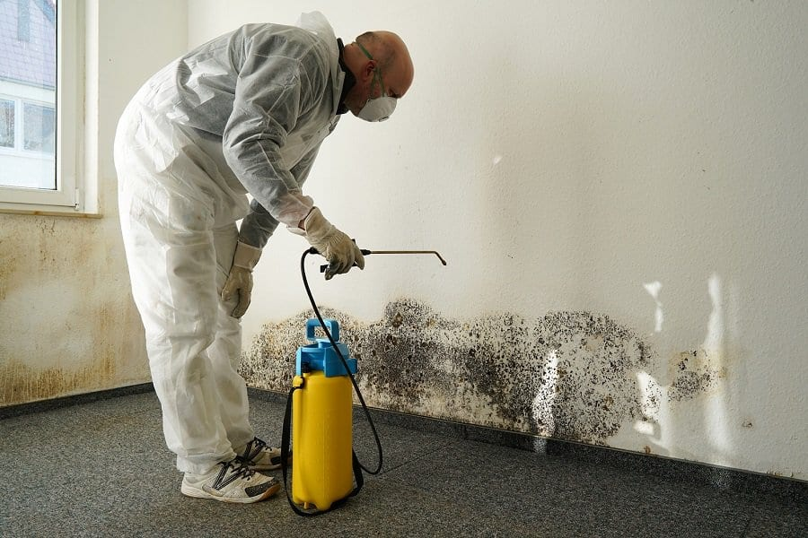 Area Wide Mold Removal